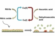 Copper Complex in Poly(vinyl chloride) as a Nitric Oxide-Generating Catalyst for the Control of Nitrifying Bacterial Biofilms
