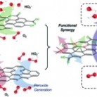 Functions in cooperation for enhanced oxygen reduction reaction: the independent roles of oxygen and nitrogen sites in metal-free nanocarbon and their functional synergy