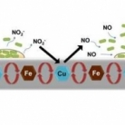 Iron Complex Facilitated Copper Redox Cycling for Nitric Oxide Generation as Nontoxic Nitrifying Biofilm Inhibitor