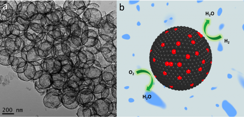 (a) TEM image of a hollow sphere structured catalyst. (b) Schematic illustration of ORR and HOR on the hollow sphere structured catalyst.